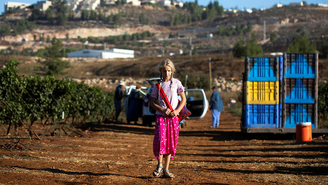 Una joven, parte de un grupo de voluntarios del grupo cristiano con sede en Estados Unidos HaYovel, observa cómo otros cosechan uvas en un viñedo en las afueras del asentamiento de Har Bracha.