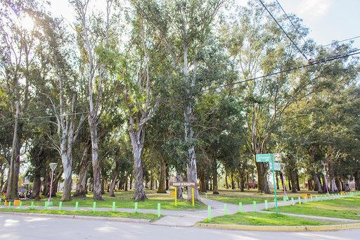 Bosque de Eucaliptus - Año 1896