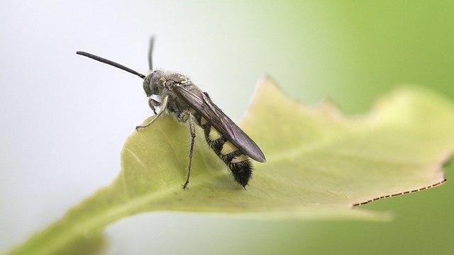 Una empresa israelí busca producir alimentos con proteínas extraídas de las moscas