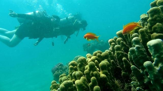 Arrecife de coral de Eilat