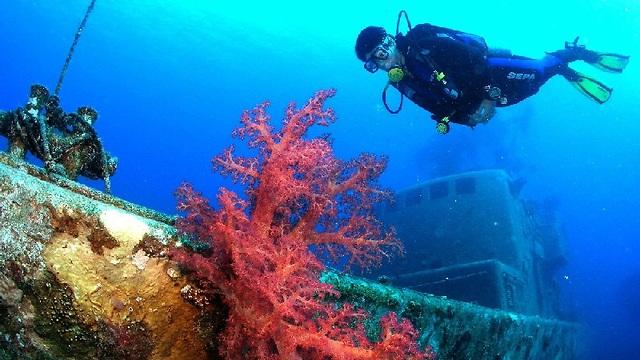 Los arrecifes de corales de Eilat podrían verse dañados por el calentamiento global