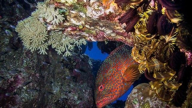 El arrecife de coral de Eilat