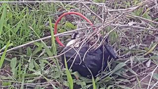 Un artefacto explosivo que había sido adherido a un globo