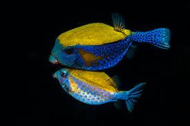 Fotografías subacuáticas