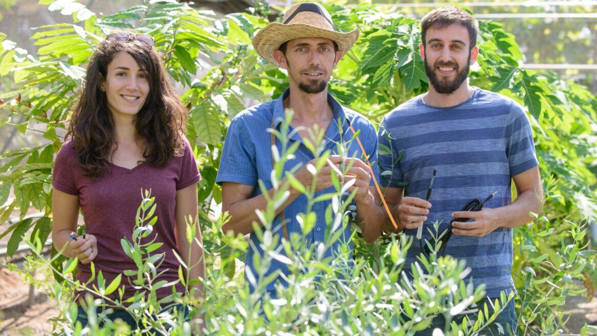 El doctor Tamir Klein junto a los estudiantes de investigación Yael Wagner e Ido Rog en el Laboratorio de Árboles del Instituto de Ciencia Weizmann.