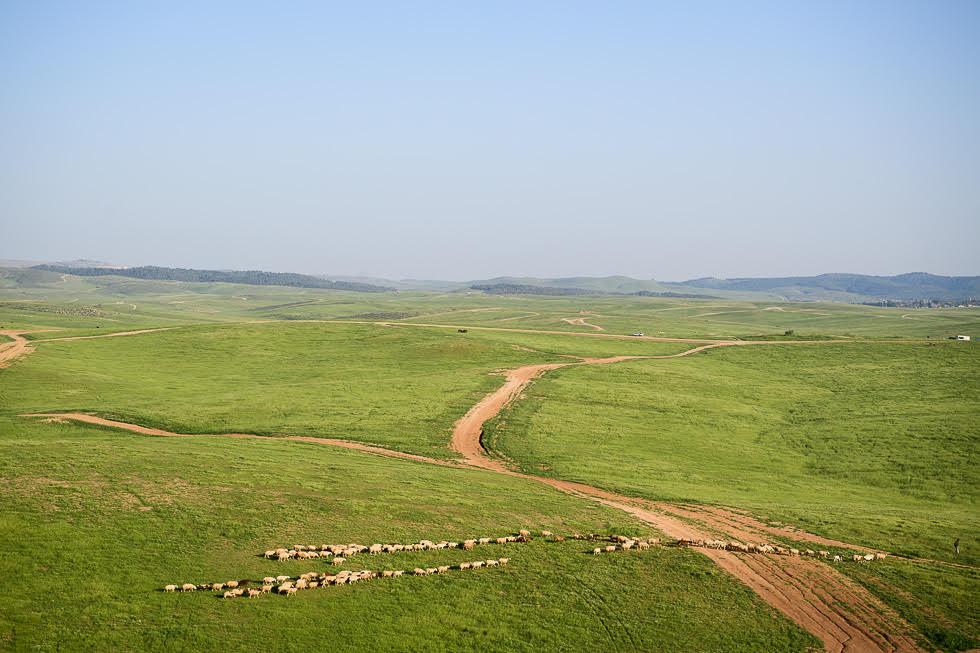 La llanura de Judea, verde como pocas veces tras una lluvia de invierno.