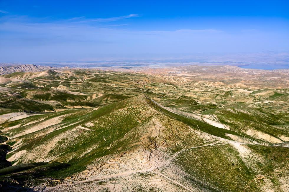 Otra consecuencia de una temporada de lluvias: un tono verde en el Desierto de Yehuda.