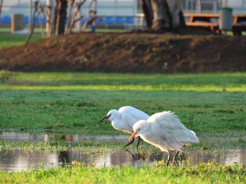 Parque Hertzliya