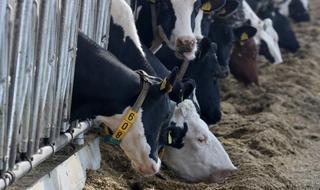 Durante este año Israel y Argentina tienen previsto comerciar 170 millones de dólares en carne vacuna.