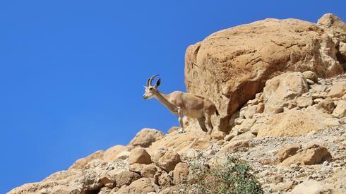 La reserva natural de Ein Gedi es uno de los lugares turísticos más populares de Israel