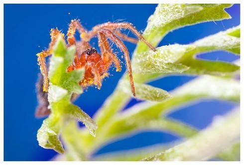 """Lior Glaichman: """"Mi hijo le tenía miedo a las arañas y verlas a través del lente le resultó interesante""""."""