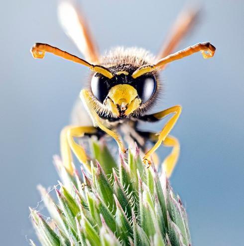Fotografía de insectos en el estudio de la casa del fotógrafo Lior Glaichman.