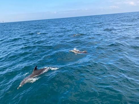 Una manada de delfines fue avistada en las costas de Tel Aviv.