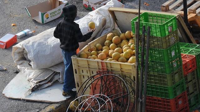 Un niño en busca de alimentos en Safed.