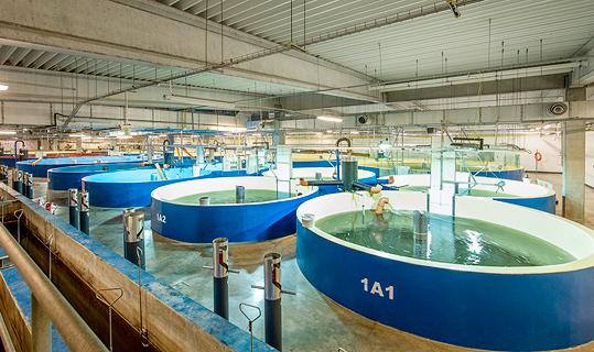 Centro de investigación de AquaMaof en Polonia.