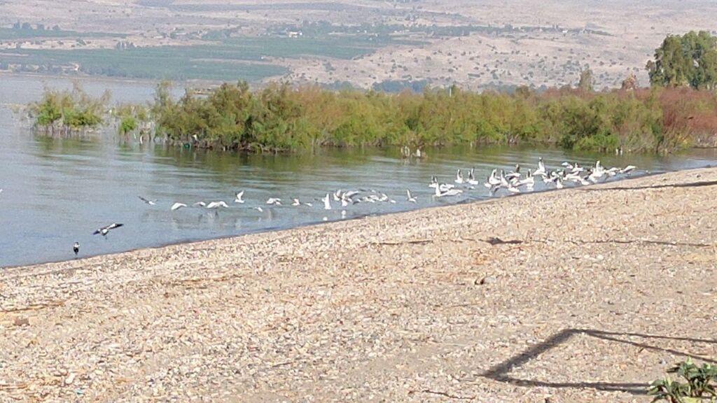 Mar de Galilea.