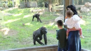 Safari Ramat Gan