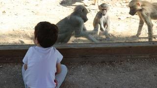 El safari de Ramat Gan, un destino muy popular cerca de Tel Aviv.