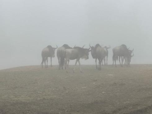 Nevoa no Zoological Ramat Gan, não subarbi de Tel Aviv.