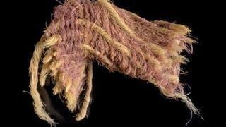 Un pedazo de tela con tinte púrpura encontrado en Israel.