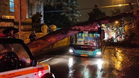 Os fortes ventos derrubaram uma árvore que caiu em um ônibus em Jerusalém sem causar ferimentos.