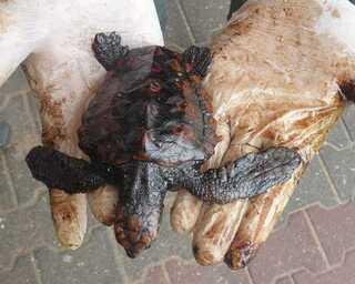 Tortuga Contaminada
