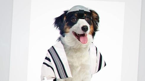 Imagen de la campaña de Yahadut Hatorah que compara a perros con judíos reformistas.