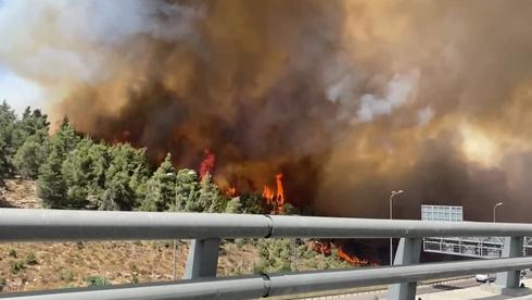 Incendio forestal hace estragos en el concejo de Mevaseret Zion, en las afueras de Jerusalem.