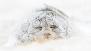 """""""Monstruo de las nieves"""" de Amit Eshel."""
