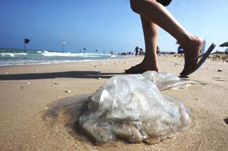 Las medusas invaden las playas israelíes.