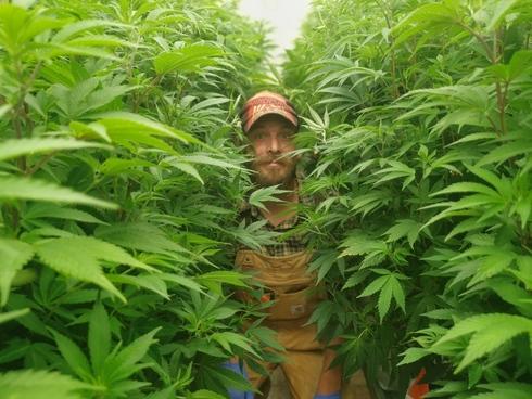"""Matías Litvak: """"Hay que acabar con la demonización del cannabis""""."""