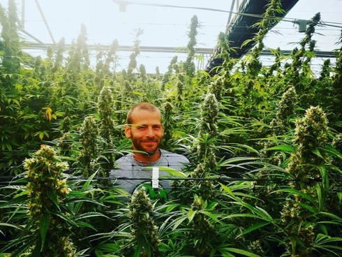 Matías Litvak rodeado de plantas de cannabis en la empresa israelí Better Medical Cannabis.