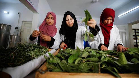 Mujeres palestinas recogen hojas de árboles en Gaza.
