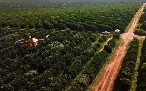 Startup israelí SeeTree apunta a un mejor rendimiento de los árboles frutales.