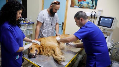 El veterinario Ahmad Amad realiza una ecografía a un perro en la clínica veterinaria Royal Care.