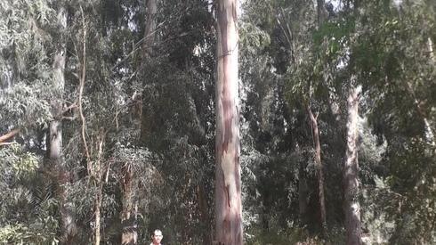 Los árboles más altos de Israel.